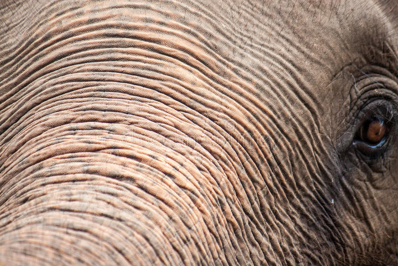 Detail van een olifant royalty-vrije stock fotografie