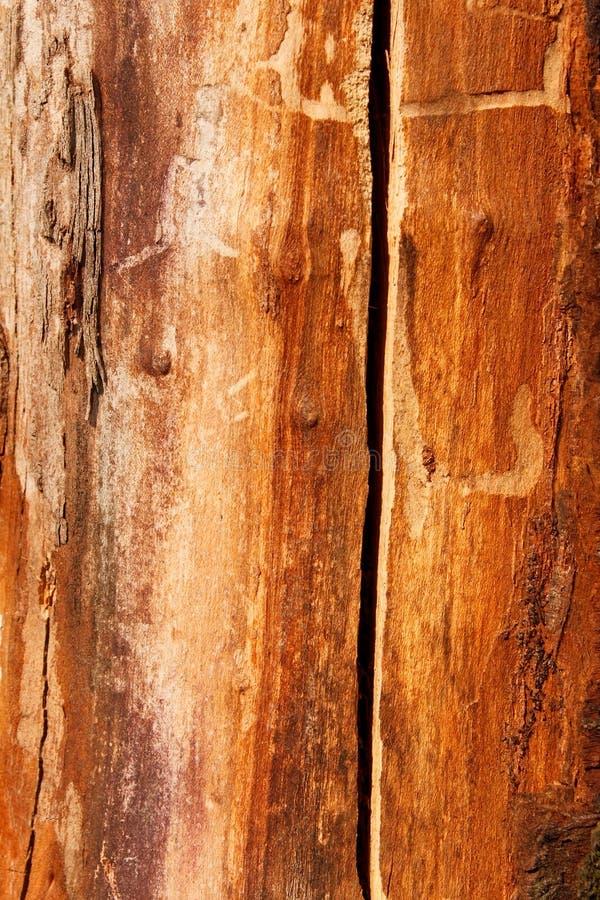 Detail van een oude droge boomstam van de kersenboom royalty-vrije stock afbeeldingen