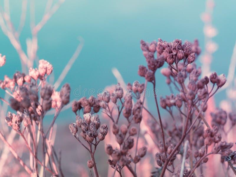 Detail van een roze installatie op een blauwe achtergrond stock foto's
