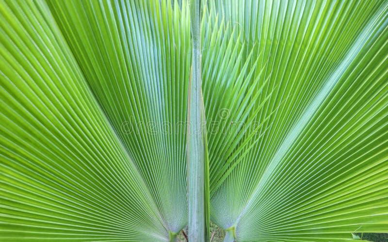 Detail van een tropisch palm groen blad De decoratie van de tuin royalty-vrije stock afbeelding