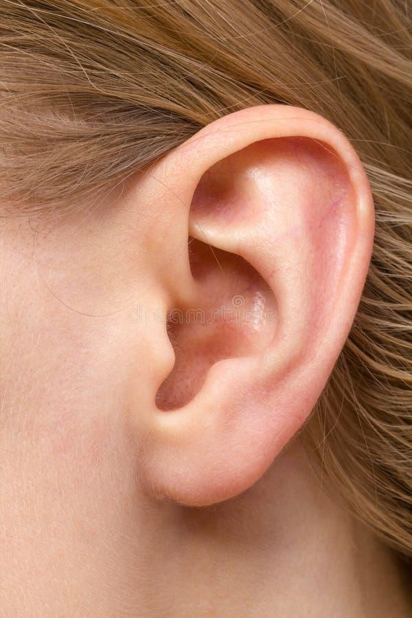 Detail van het hoofd met vrouwelijke menselijke oor dichte omhooggaand stock foto's