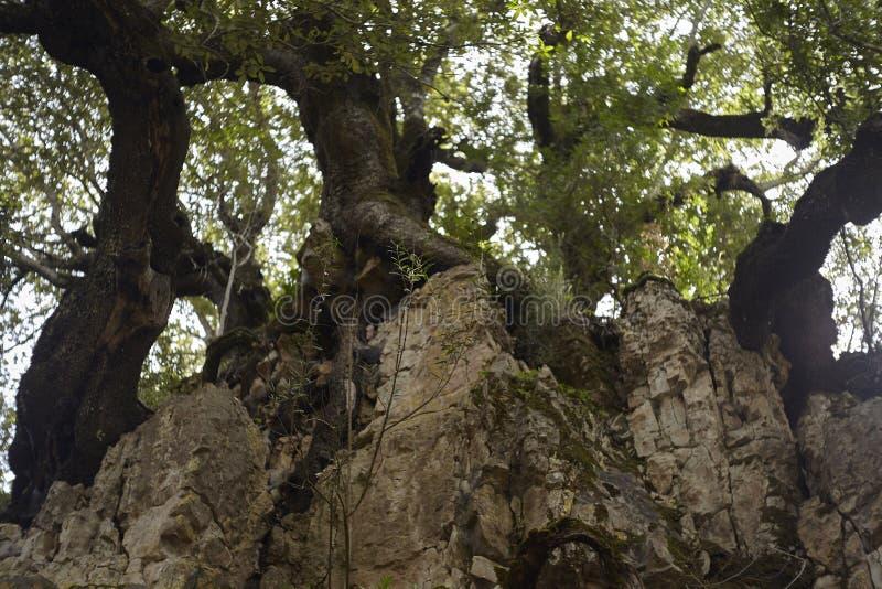 Detail van het kreupelhout stock fotografie