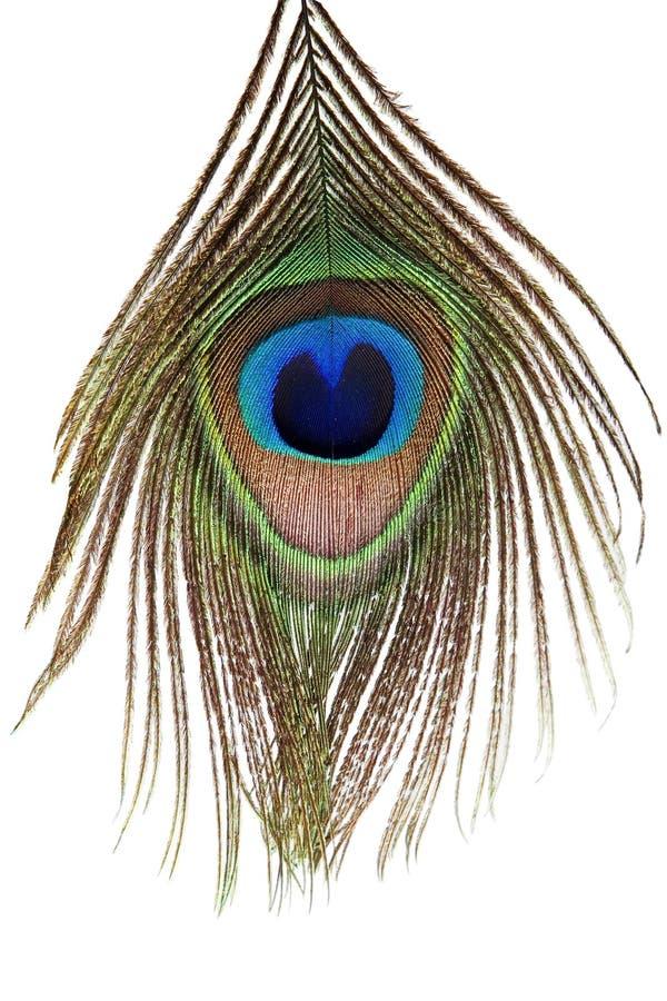 Detail van het oog van de pauwveer stock fotografie
