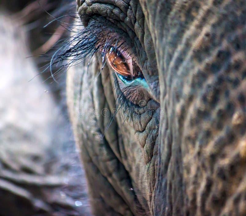Detail van het oog van een olifant royalty-vrije stock foto's