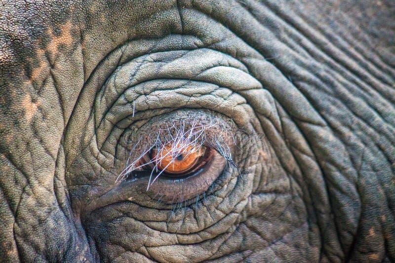 Detail van het oog van een olifant royalty-vrije stock fotografie