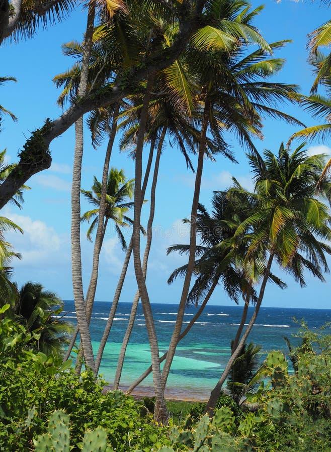 Detail van het strand van GLB Chavalier op het Eiland Martinique royalty-vrije stock foto's