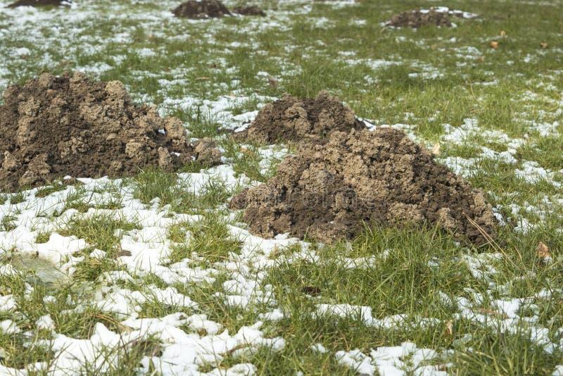 Detail van molshopen door mollen wordt gemaakt die Zij zijn ergerend omdat het het gras van de tuin beschadigt royalty-vrije stock foto