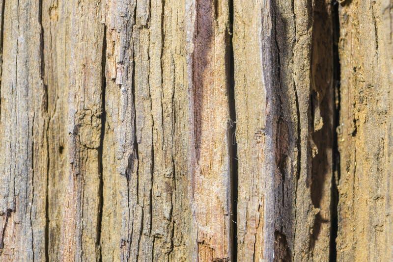 Detail van oude houten schors royalty-vrije stock foto's