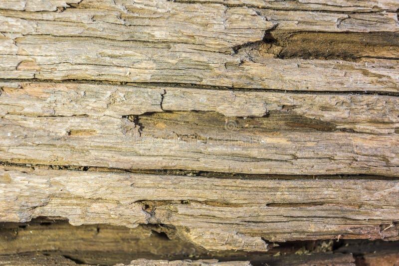 Detail van oude houten schors stock afbeeldingen
