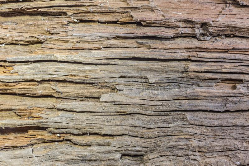 Detail van oude houten schors stock afbeelding