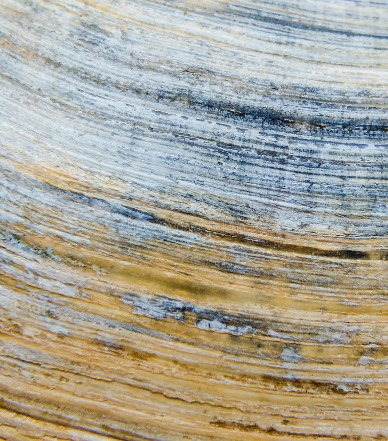 Detail van Overzees gekleurde shell dichte omhooggaand royalty-vrije stock foto