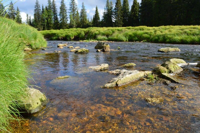 Detail van rivier stock afbeelding