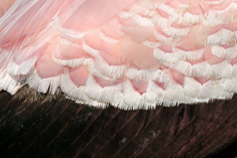 Detail van roze en zwarte gevederteveer van grote vogel Geel-gefactureerde Ooievaar, Mycteria-ibis, die in het gras, Tanzania zit stock fotografie