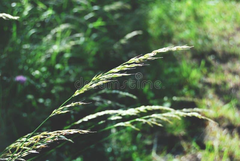 Detail van stelen in gras stock afbeeldingen