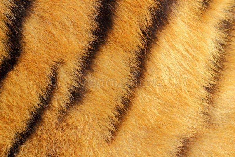 Detail van tijgerbont royalty-vrije stock fotografie