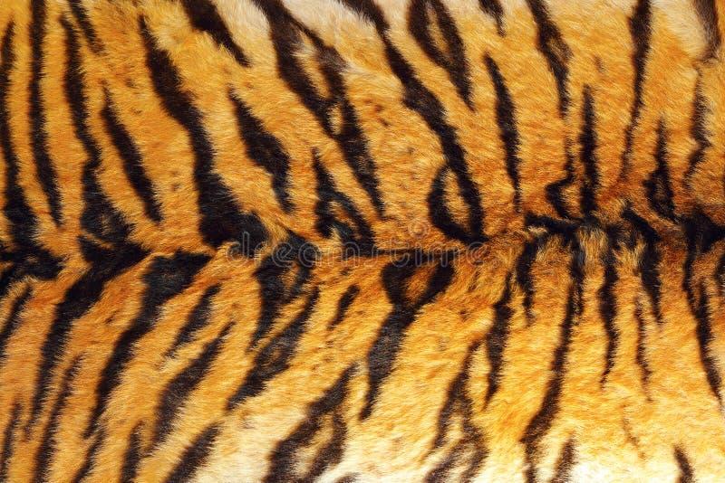 Detail van tijgerstrepen op leer stock fotografie