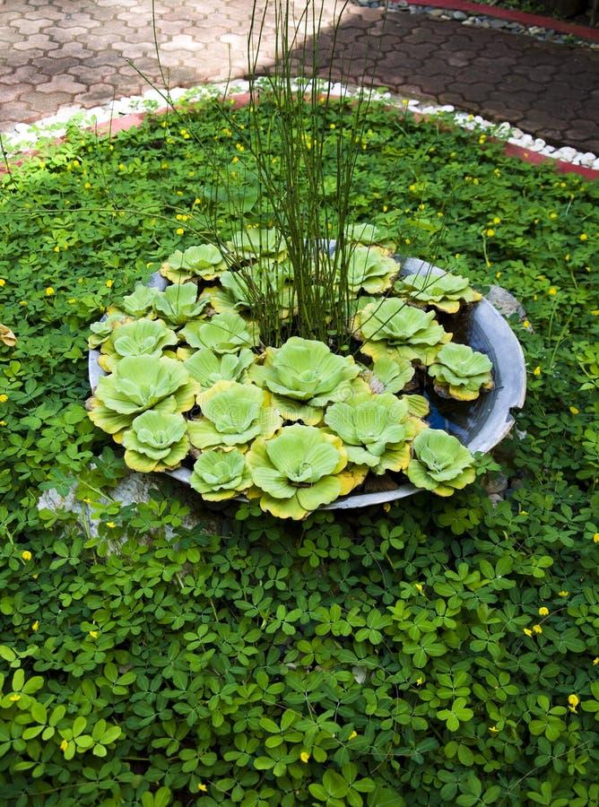 Detail van tropische tuin in Boracay stock afbeeldingen