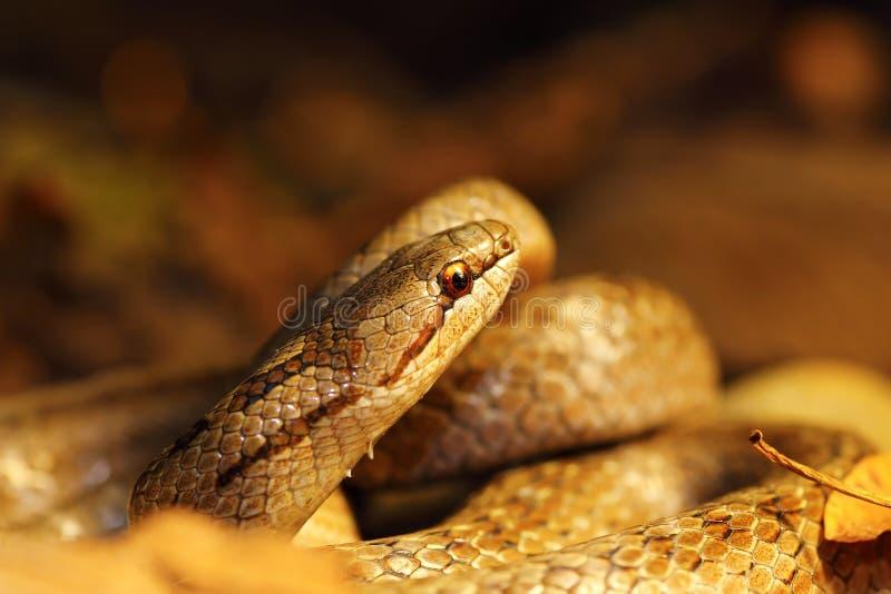 Detail van vlotte slang in de herfst bosgrond royalty-vrije stock afbeeldingen