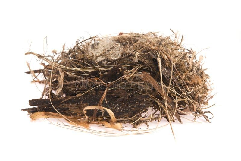 Detail van vogeleieren in nest royalty-vrije stock foto's