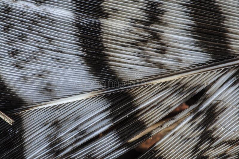 Detail van Vogelveren in de Adirondack-Bergen van Nieuwe Yor royalty-vrije stock afbeeldingen