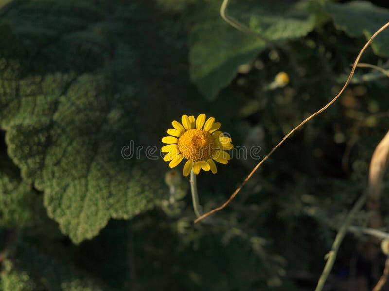 Detail van zeer aardige gele bloem stock foto