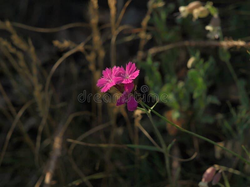 Detail van zeer aardige roze bloem stock afbeelding