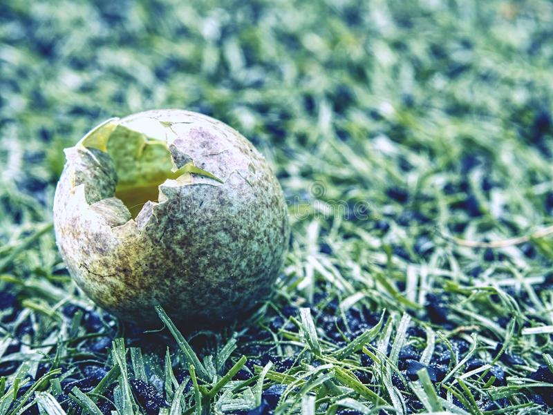 Detail view into broken wild egg in grass. Small brown blue green shell stock images