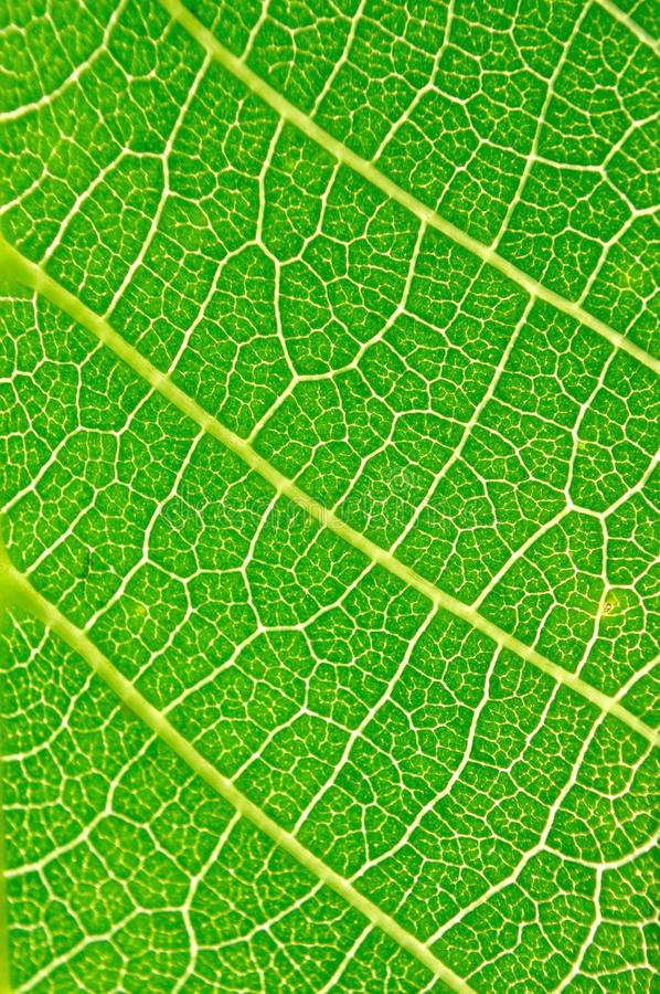 Detail view of green leaf texture stock photos