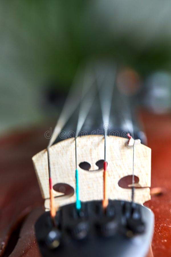Detail of violin. Selective focus with shallow depth royalty free stock image