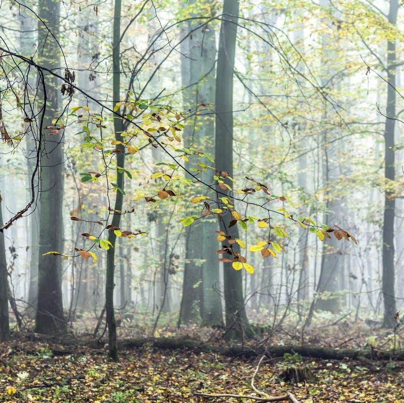 Detail von Bäumen im nebeligen Wald lizenzfreie stockfotografie
