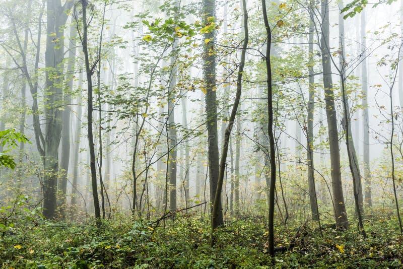 Detail von Bäumen im nebeligen Wald lizenzfreie stockbilder