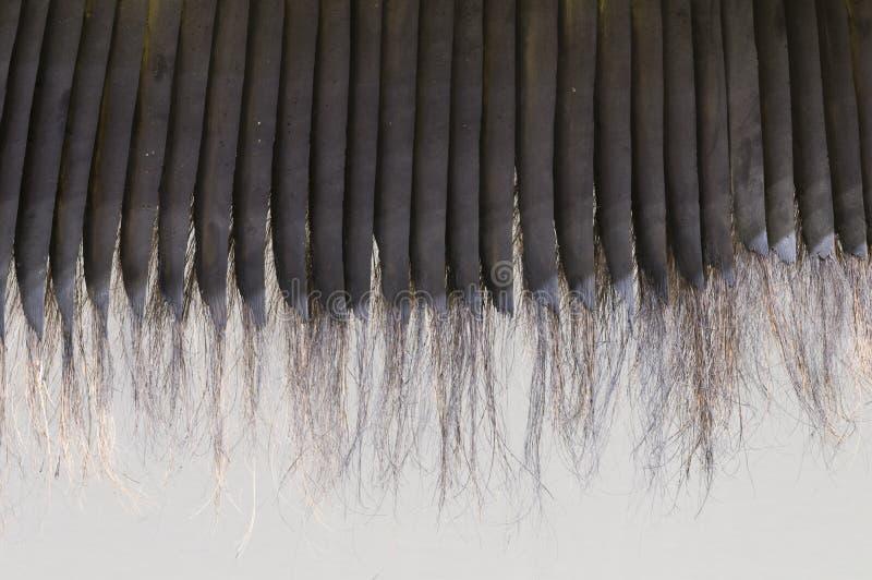 Detail von Baleen lizenzfreie stockfotografie