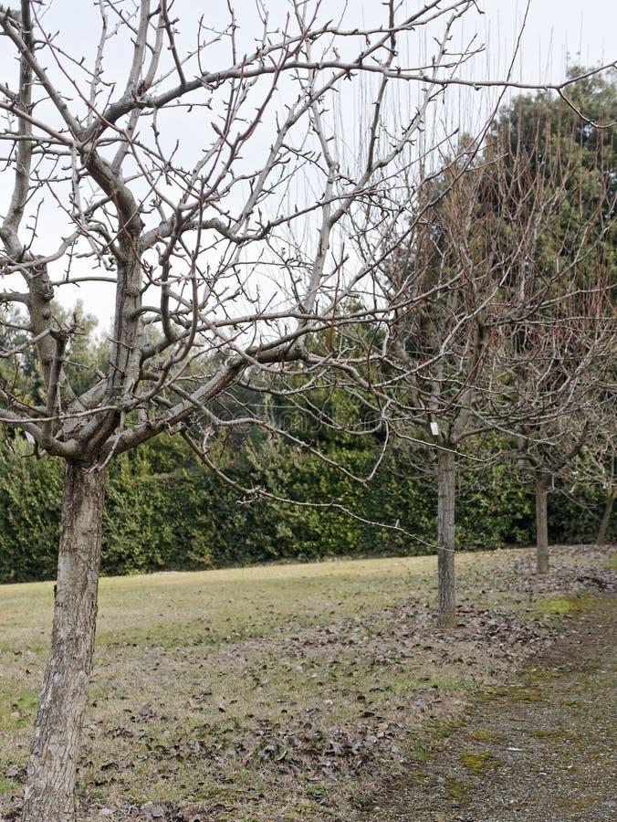 Detail von boboli Garten lizenzfreie stockfotografie