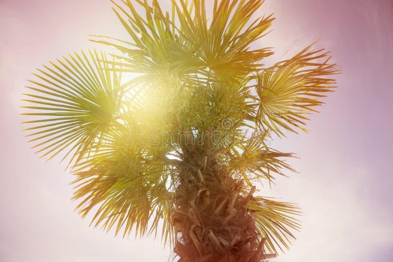 Detail von Daten an der Palme stockfotografie