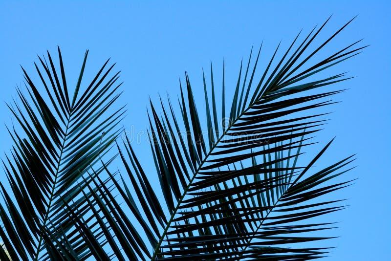 Detail von Palmblättern stockbild
