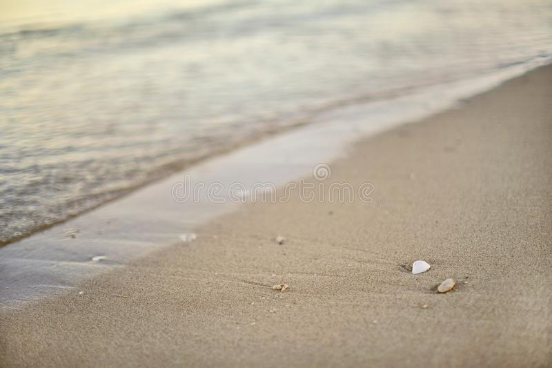 Detail on wet sand on the beach, blurred sea in background - shallow depth of field photo - only small white seashell in stock images