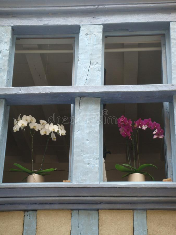 Detail of a wood window of blue with white and purple orchideis. stock images