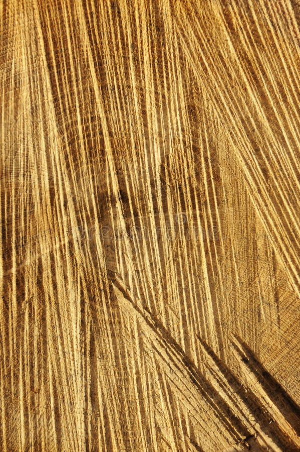 Download Detail Of Wooden Cut Texture - Rings And Saw Cuts Stock Image - Image: 17673933
