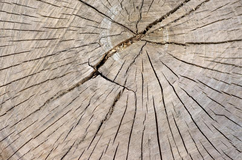 Detail of wooden stump, cut tree log, beautiful wood structure, textured ages royalty free stock photography