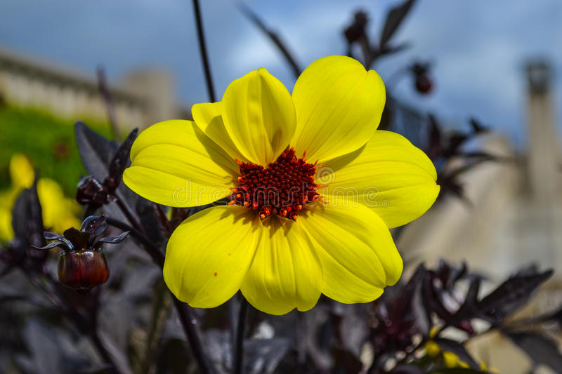 Detail of yellow flower stock photography