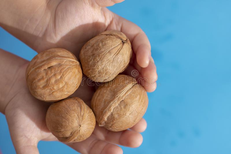 Detail of young girls hands, holding a handful of organic walnuts. Selective focus royalty free stock images
