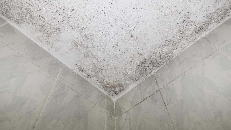 Damp patches in bath roof corner, bottom view royalty free stock photos