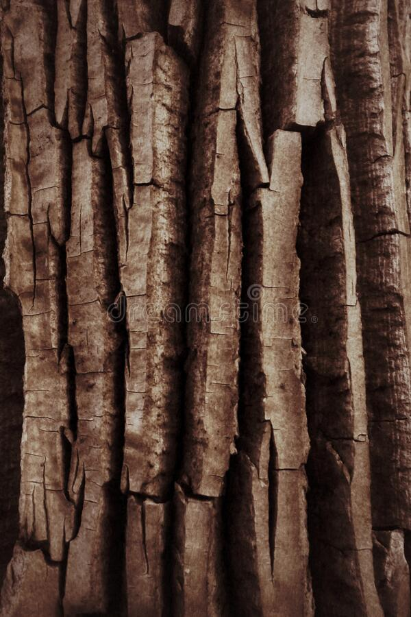 Detailed brown tree bark for a natural background. Textures and patterns in nature stock images