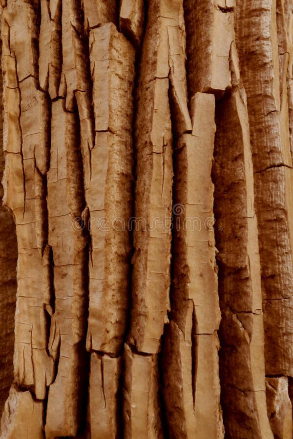 Detailed brown tree bark for a natural background. Textures and patterns in nature royalty free stock photos