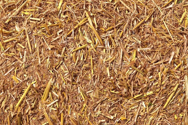 Detailed close up view on golden straw on an agricultural field. Seen in northern germany stock image