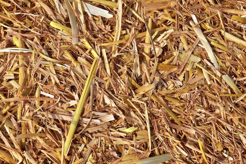 Detailed close up view on golden straw on an agricultural field. Seen in northern germany royalty free stock photos