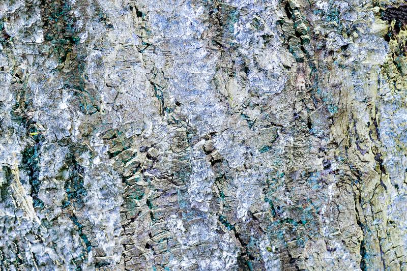 Detailed close up view on a weathered tree bark texture. Found in germany stock images