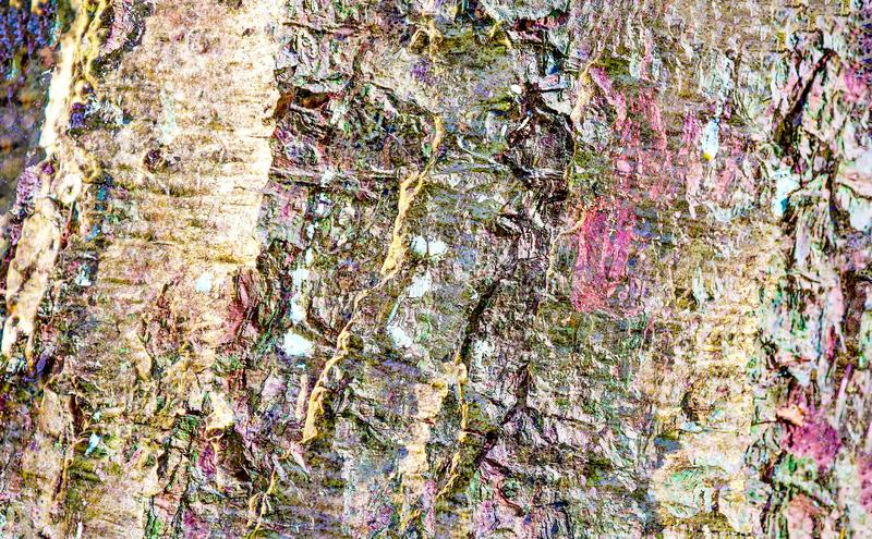 Detailed close up view on a weathered tree bark texture. Found in germany stock photos