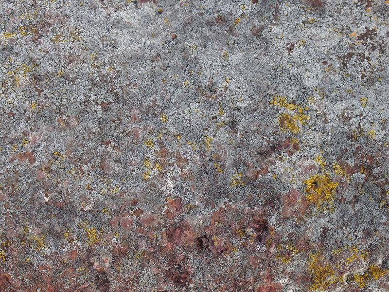 Detailed close up white lichen covering a rough red sandstone rock royalty free stock photo