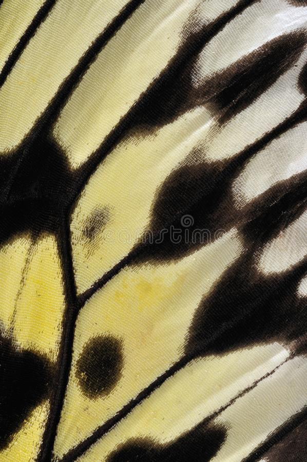 Closeup of a Paper Kite butterfly wing stock image